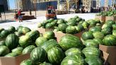 «НІБУЛОН» відправив першу партію херсонських кавунів до Києва по Дніпру